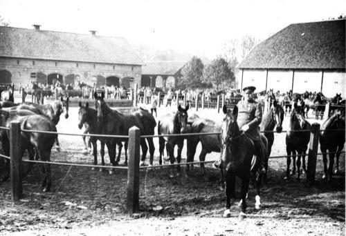 Remonten im Depot Mariensee